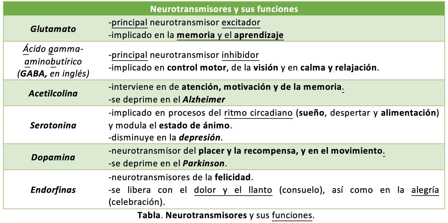 Core Radiológico Pacientes Tumores Neuroendocrinos Tne Cancer Coach Qué Es El Coaching Cerebro Emocional I Bases Del Funcionamiento Cerebral